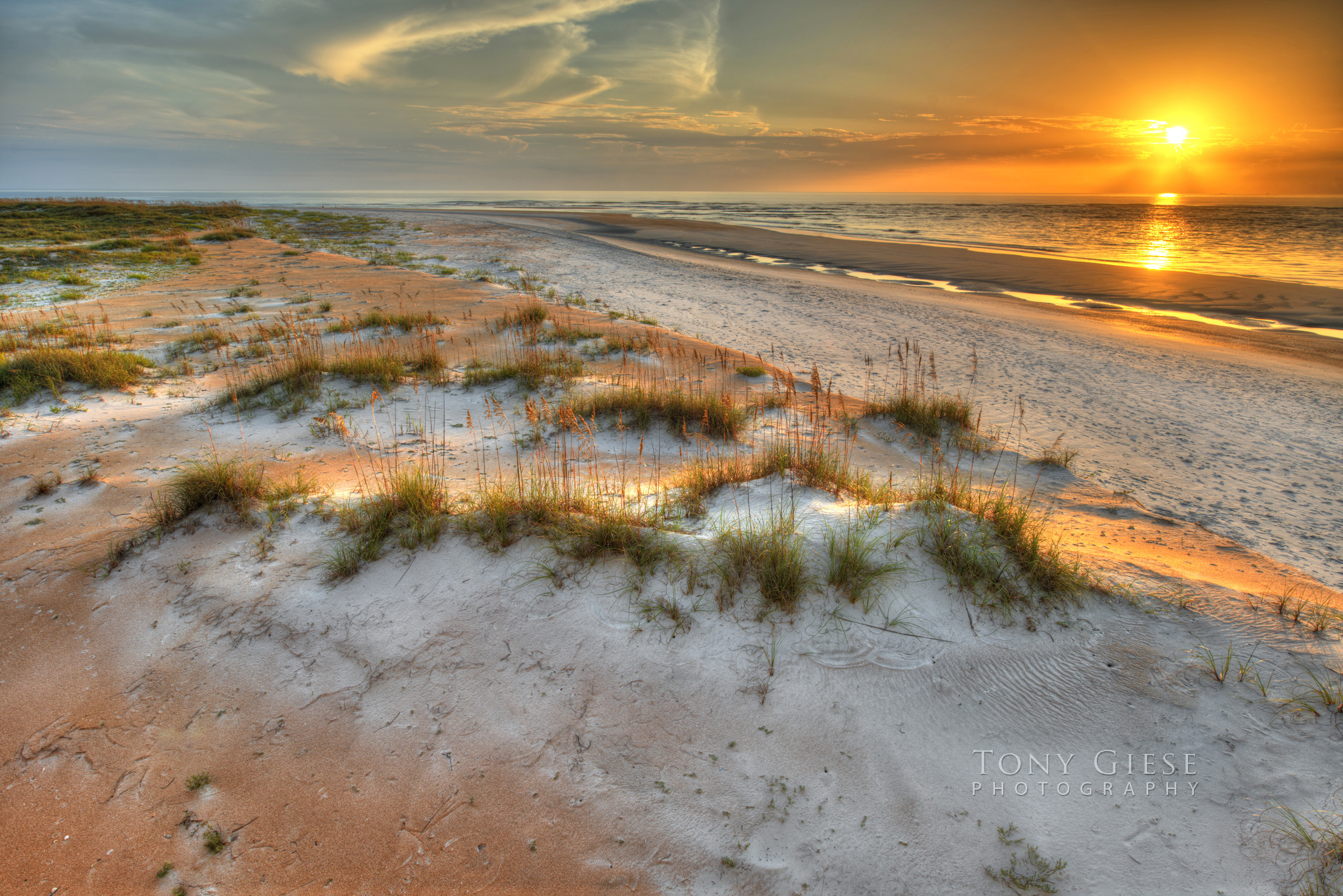 Sand, salt, heat makes sea oats our coast's best ambassadors. Photography by Tony Giese, Matanzas Inlet, Florida.