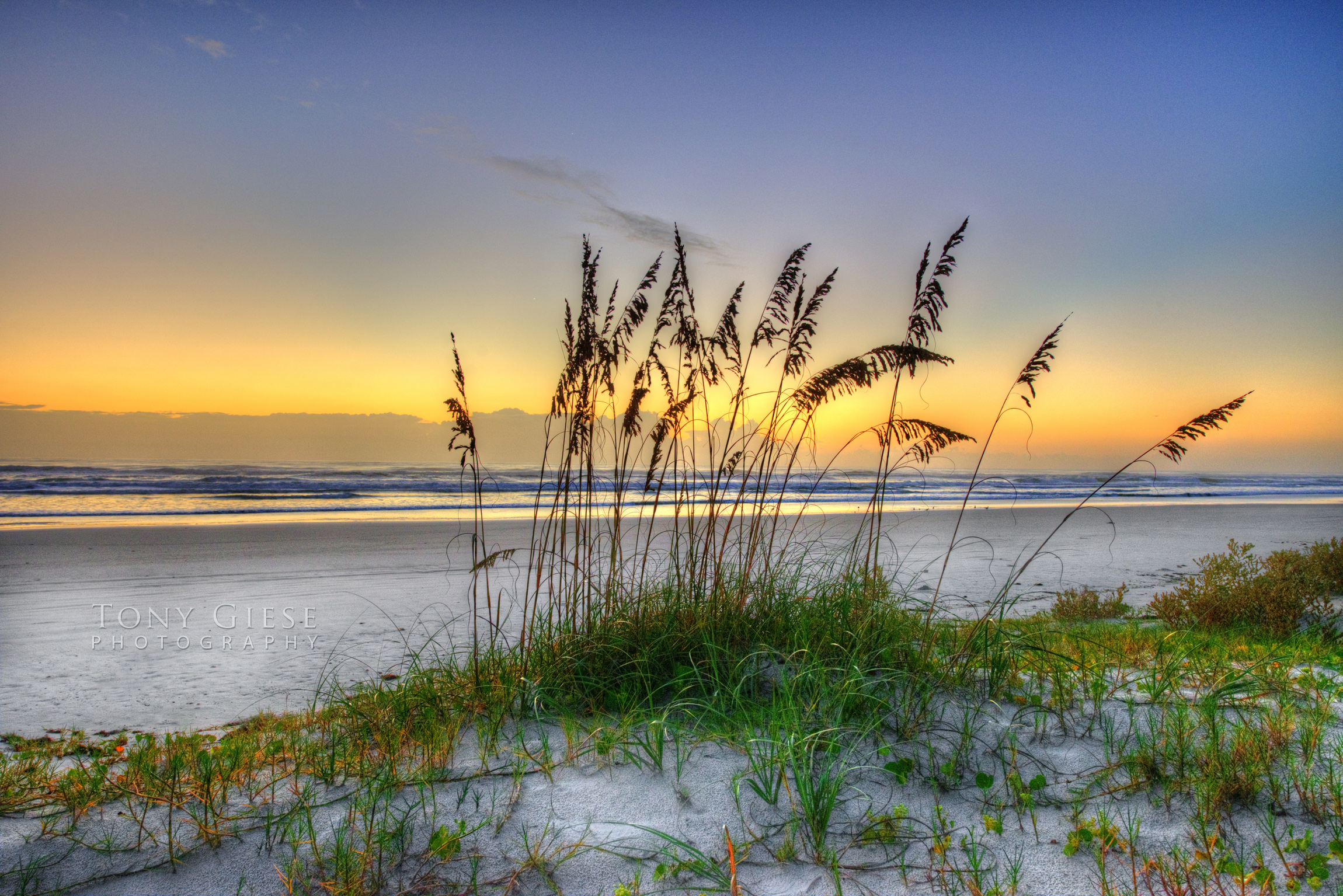 Florida beaches have a symbol, it's the sea oat. Photography by Tony Giese.