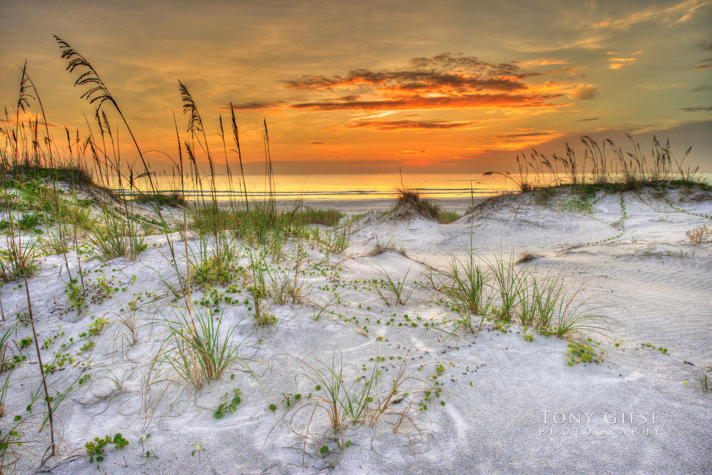 Live in the sunshine, swim in the sea, drink the wild air - Ralph Waldo Emerson. Photography by Tony Giese. Sea Oats Ponce Inlet, FLorida.
