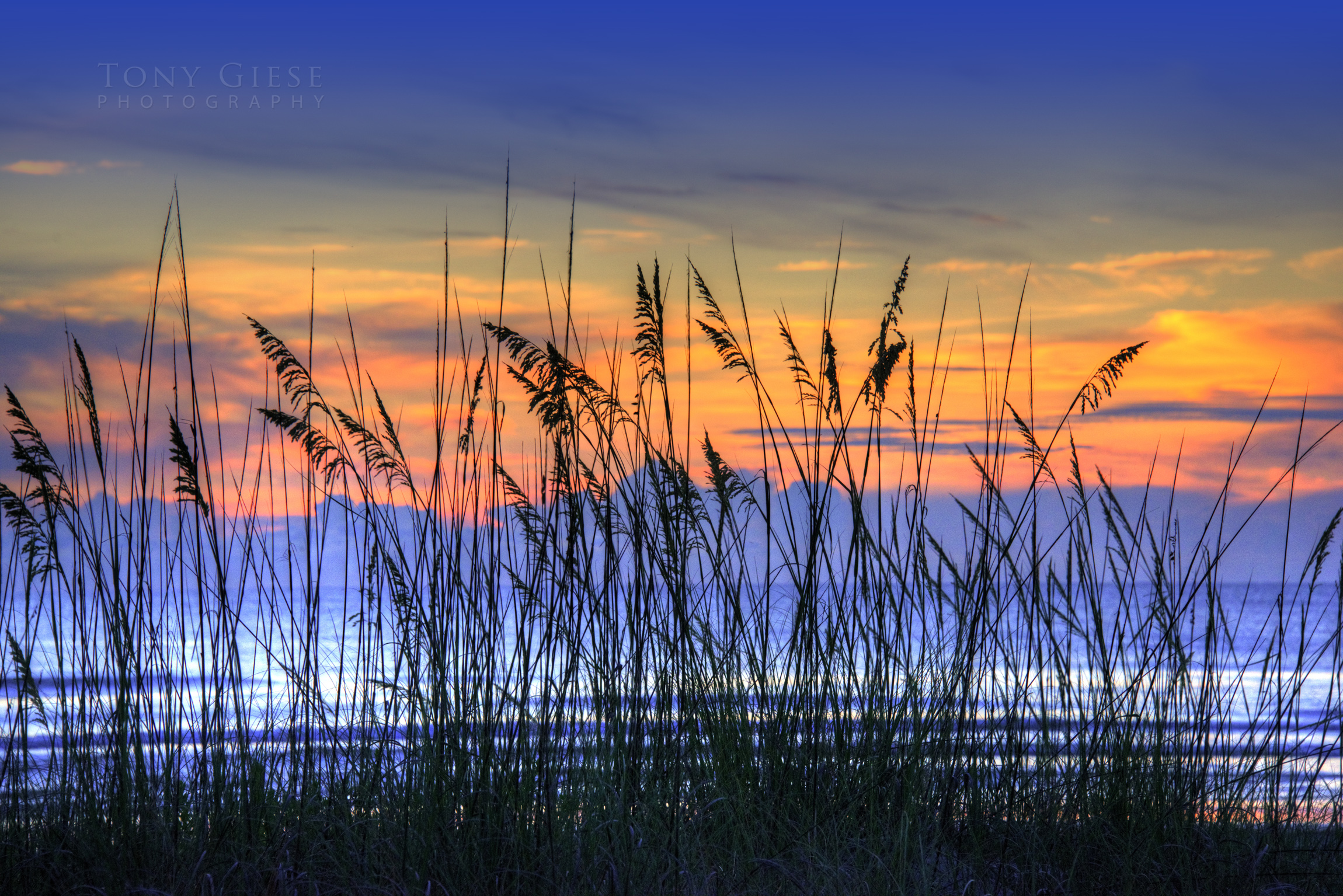 Sea Oats on New Smyrna Beach, Florida. Photo by Tony Giese Photography.
