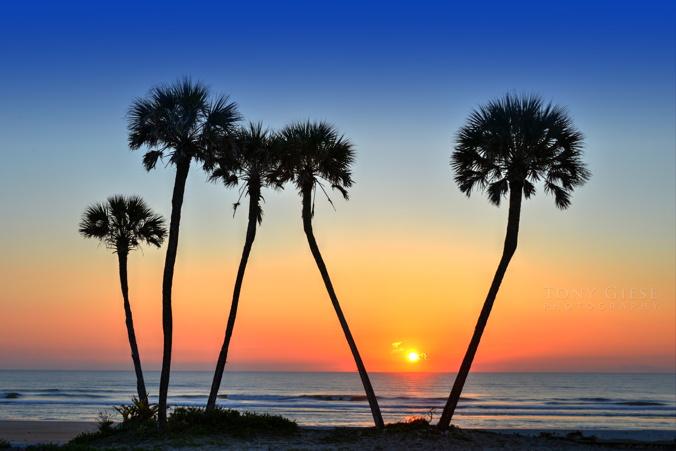 Daytona Beach Sunrise through palm trees on beach. Photography by Tony Giese Photography.