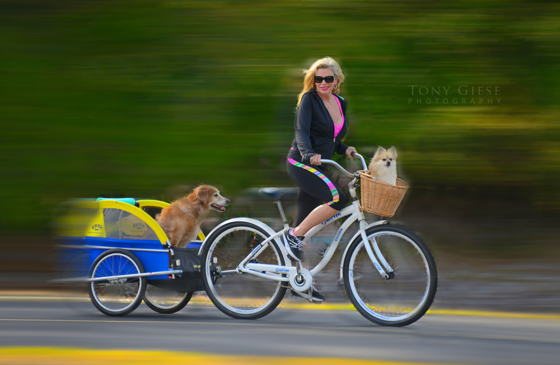 Bicycling with two dogs