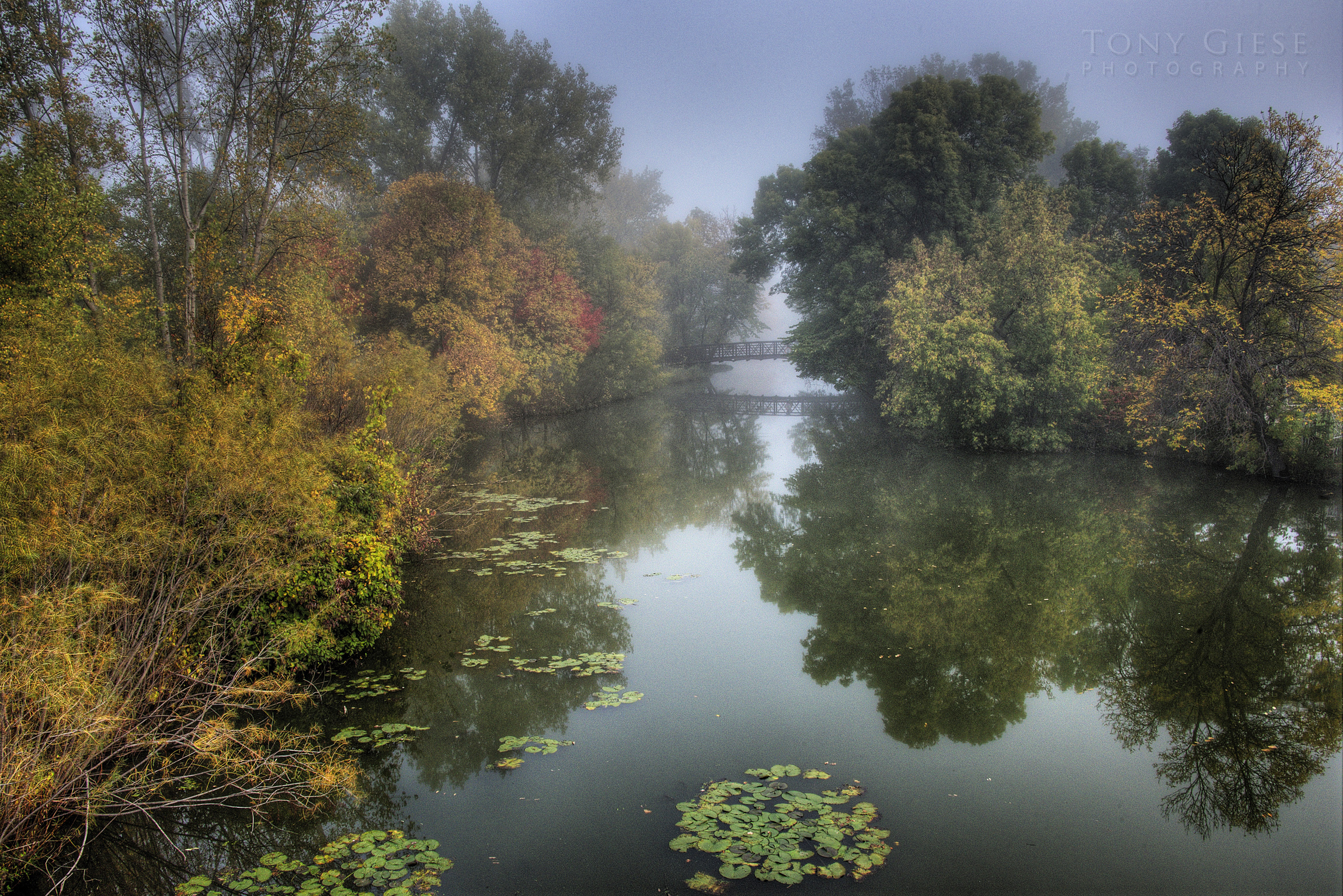 Fall colors on foggy morning with bridge crossing over Elm Creek, Elm Park Preserve, Maple Grove, Minnesota.