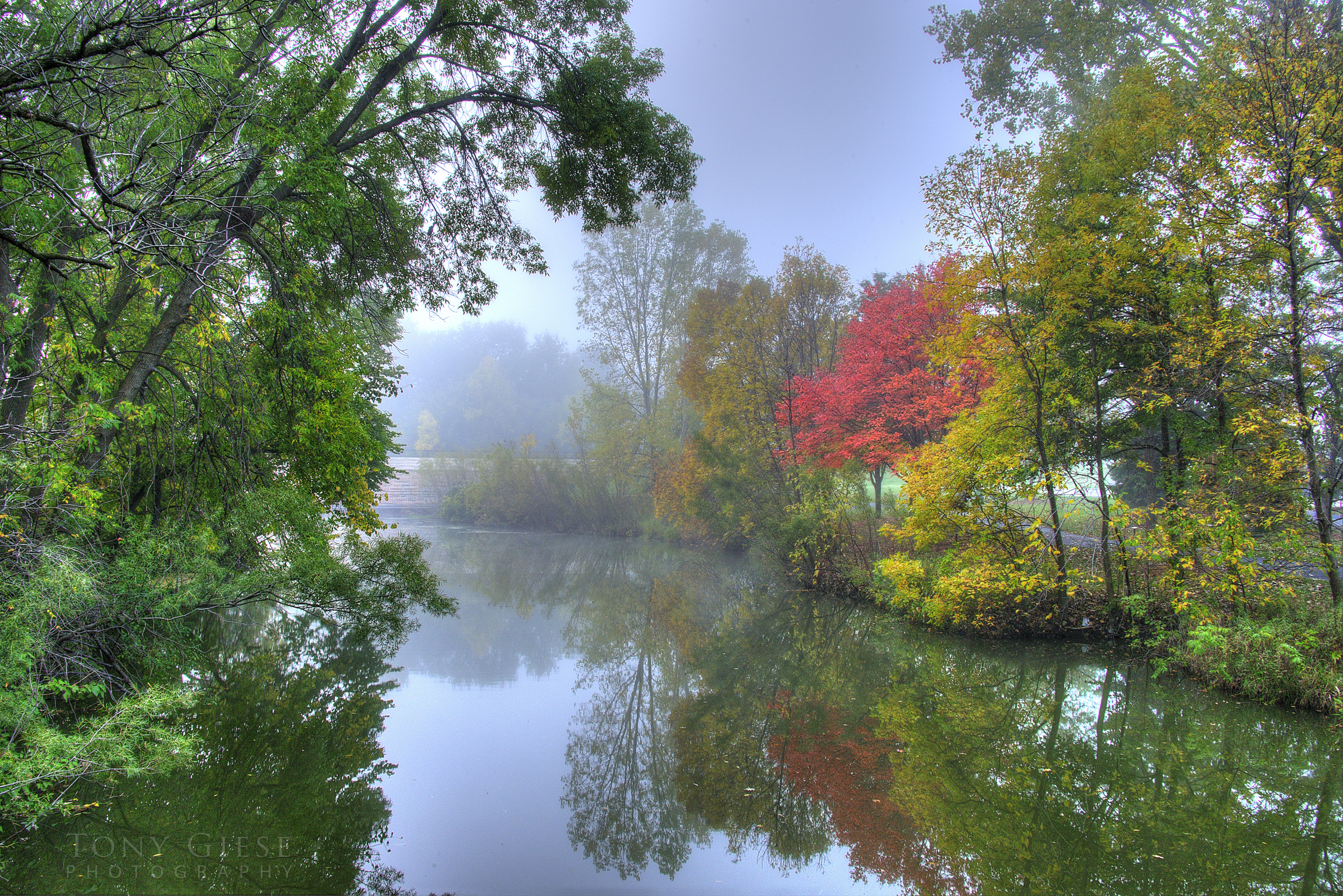 Foggy morning on Elm Creek, Lone red tree reflecting into the creek