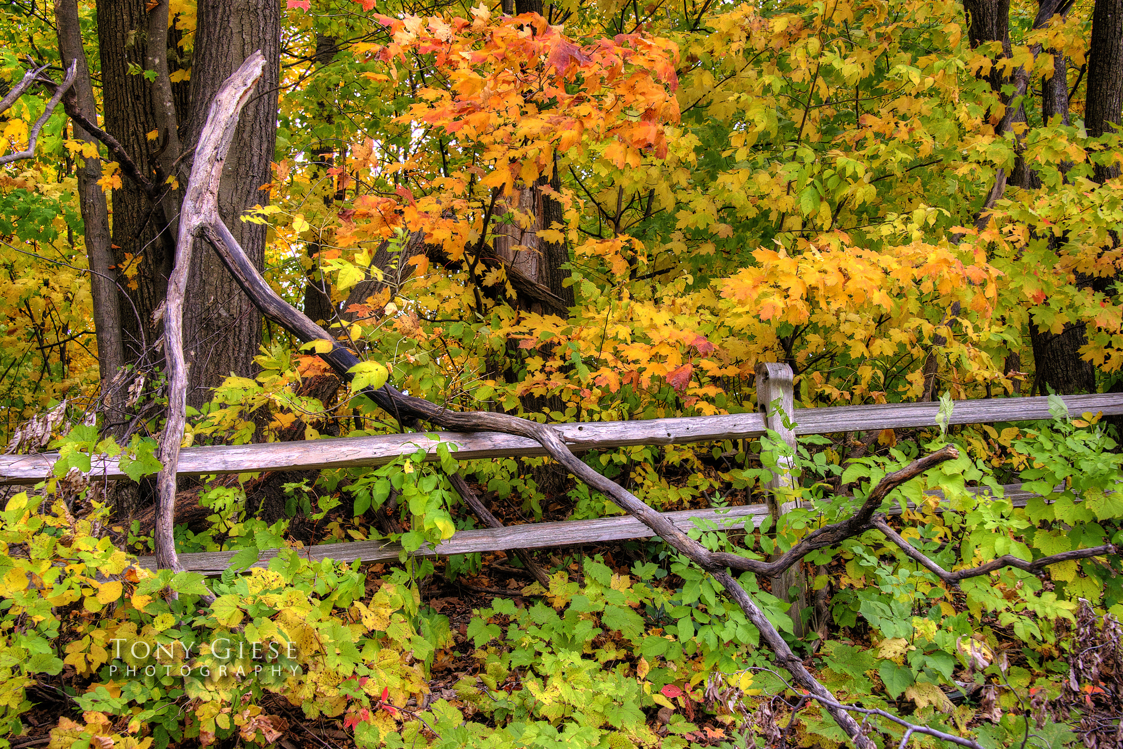 Wooden fence with fallen tree branch against colorful fall leaves.