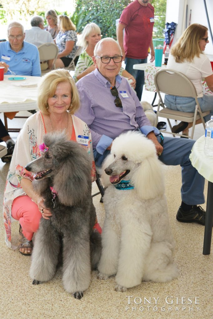Everyone enjoyed the band, even the poodles. White and Grey Poodle.