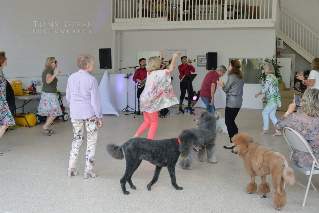 Poodles even were dancing to Those Guys Jazz Band, Port Orange, Florida.