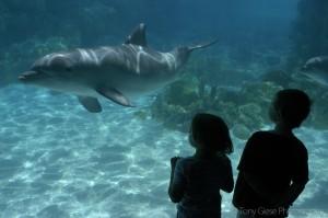 underwaterdolfinview