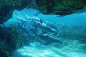 underwaterdolphins