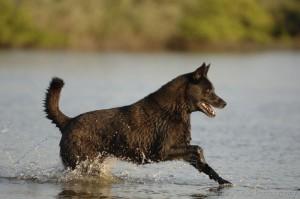 waterblackdog