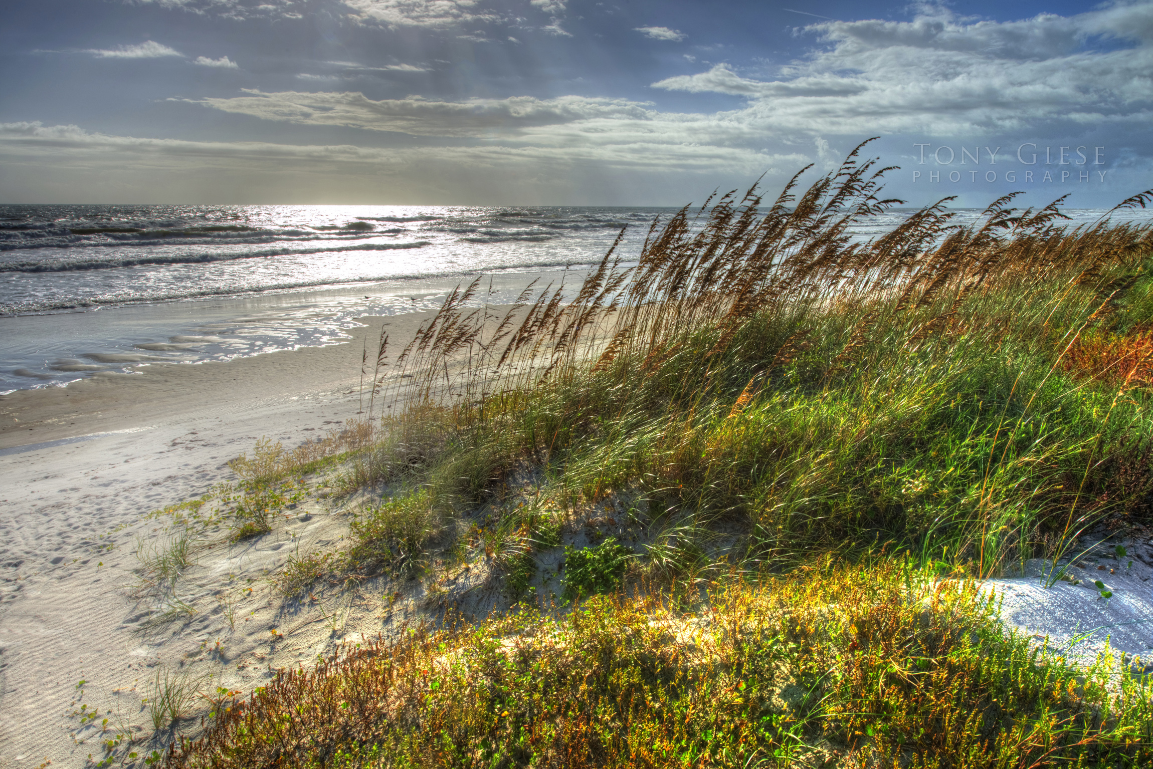 Sea Oats Daytona Beach Dsc 0671 Lr