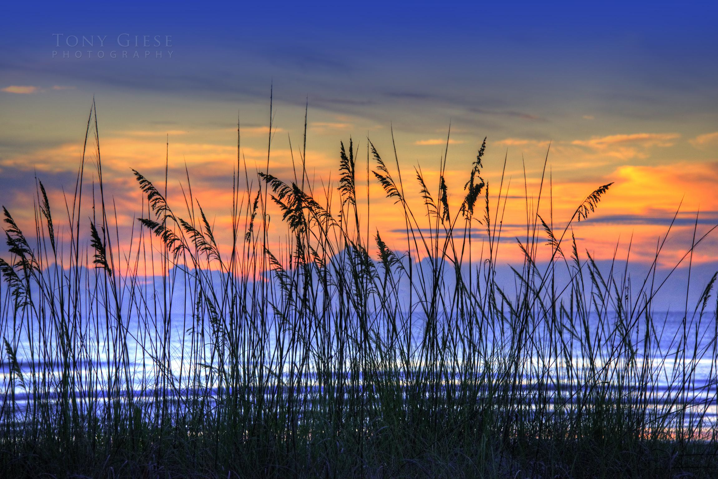 Photography Of New Smyrna Beach Tony
