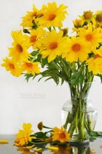 mexicansunflowers