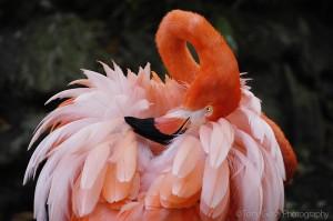 pinkflamingofl